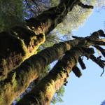 Treetops Victoria