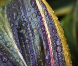vibrant leaf with raindrops
